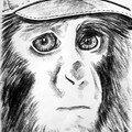 jeune macaque