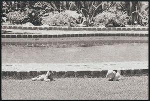 1962_dead_by_barry_feinstein_large_monroe_pool