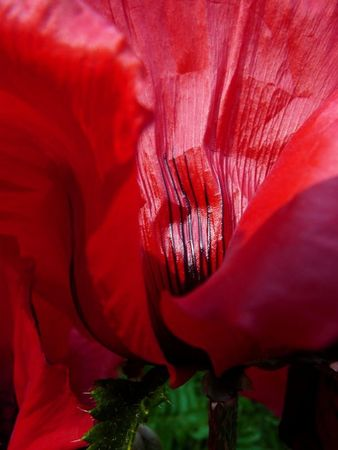 Rouge_2