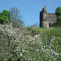 domfront-cité-médiévale-orne-normandie-le-donjon-vu-de-la-rue-notre-dame-au-printemps