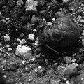 Après la pluie, un escargot