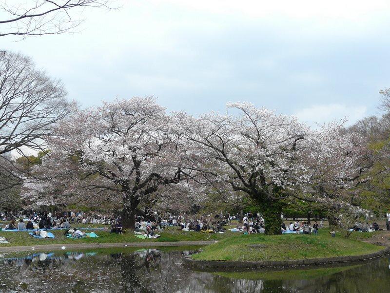 Canalblog Tokyo Cerisier 2010 Harajuku parc Meiji Jingu01