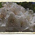 Avril fleuri