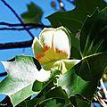1-Fleurs de Catherine 160517