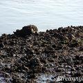 Marée basse 19 03 2011 011