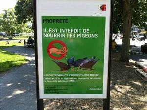 geneve1 pigeons