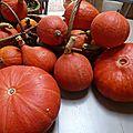potimarrons et potirons - www.passionpotager.canalblog.com