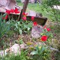 Les tulipes du bac à sable