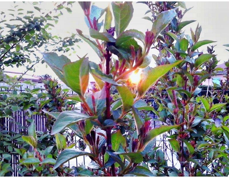 paques soleil levant a traver les arbres de la haie