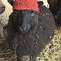 Stock de laine 2015/2017 fait !