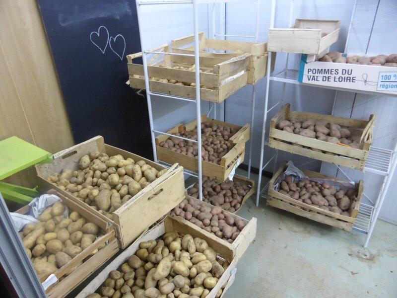 22-pommes de terre (2)