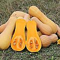 Pure de Butternut -  partir de 6 mois