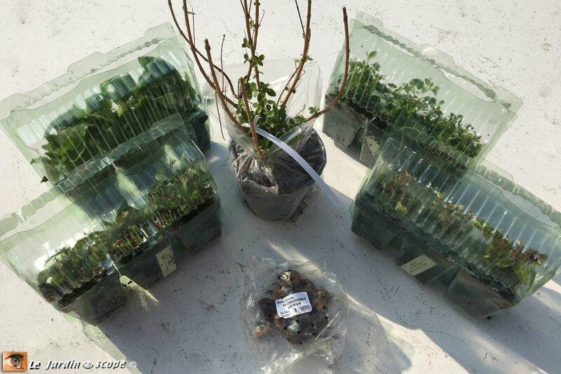 Plantes-Meilland-Richardier-2