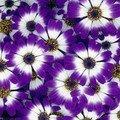 u - Flowers