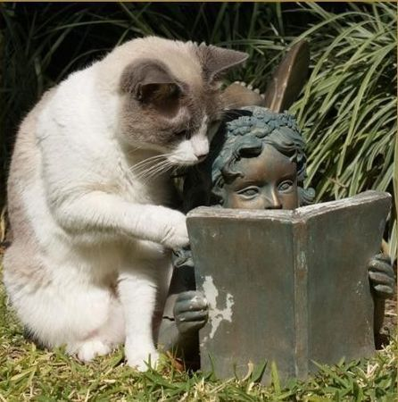 chat_book