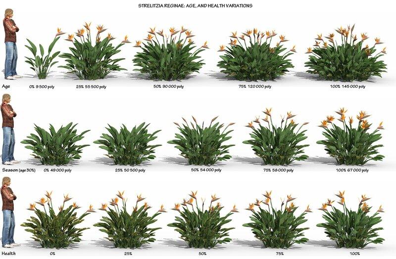 04 Strelitzia reginae paradise bird 3D tropical plant model flower jungle 3DS C4D Max FBX obj AHS