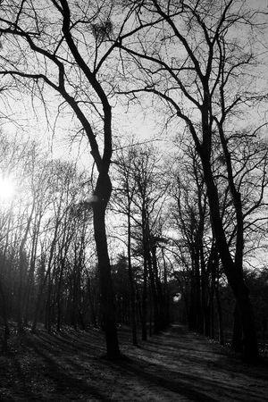 5_Bois_de_Boulogne_1600
