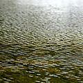 Au gré de l'eau (5)