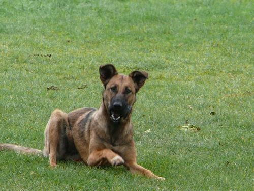 2008 09 26 Kapy le chien