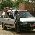 Un chameau dans ma voiture
