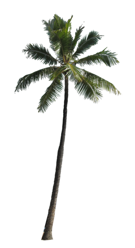 Coconut-Tree-PNG-Picture