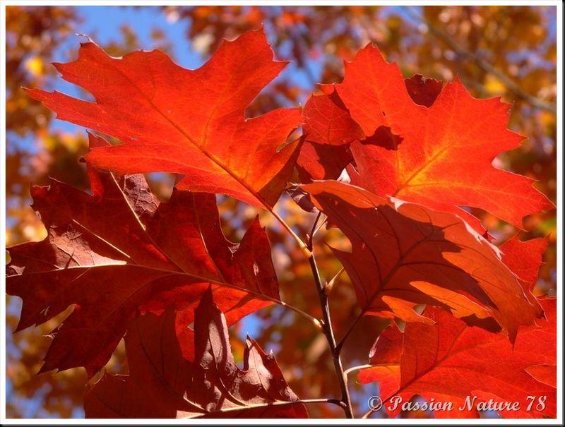 La forêt aux couleurs d'automne (9)