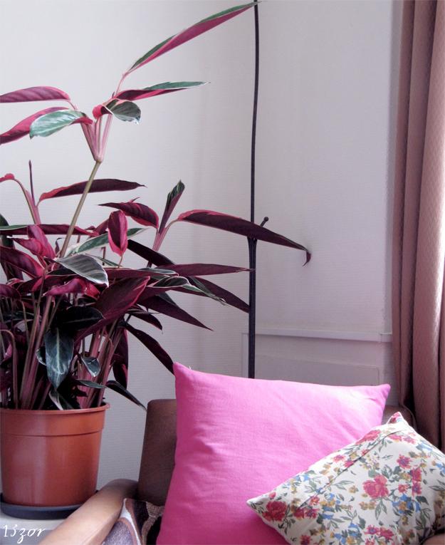 13zor_interieur_bruxelles_plantes_couleurs_1