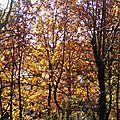 Feuillages automne 07121511