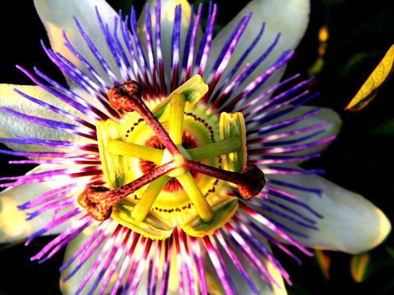 fleur de kiwi la nature la photographie laura 39 s photos. Black Bedroom Furniture Sets. Home Design Ideas