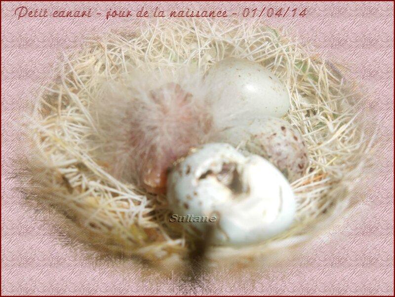 redimentionné 01 03 14 (2)