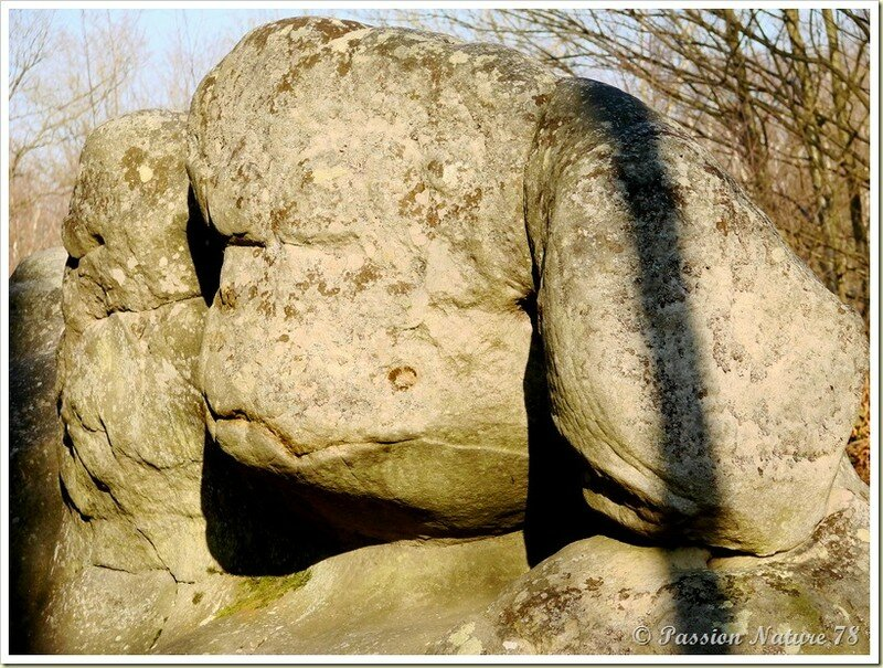 Les créatures des Vaux de Cernay (35)