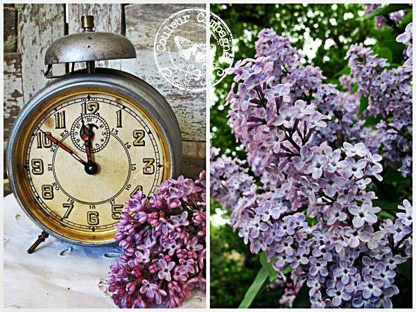 Parfum d 39 enfance couleur campagne par tinou - Au jardin de mon pere les lilas sont fleuris ...
