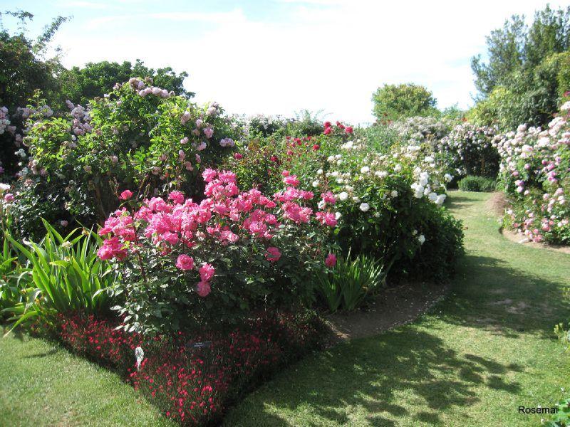 Le Jardin De Morailles Et Sa Collection De Roses Anciennes