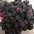 mûres de jardin - - www.passionpotager.canalblog.com