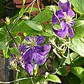 Fleurs de bretagne 2