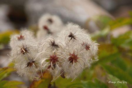 Etrange fleur
