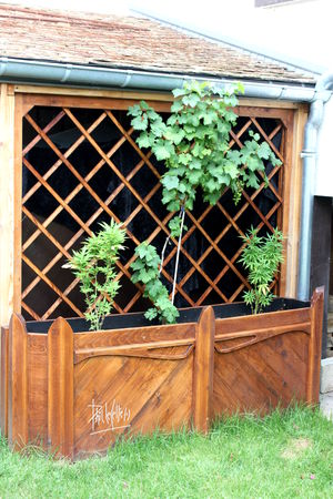 Jardiniere treillis recyclage et cie - Jardiniere treillis bois ...