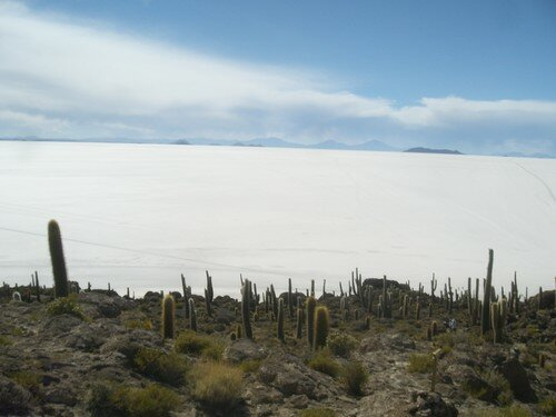Sur le Salar, ile au cactus