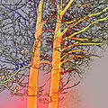 Arbres colorés à la roche-aux-fées par essé (ille-et-vilaine) le 21 décembre 2017 (4)