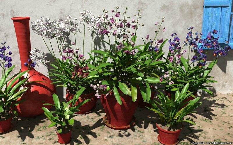 04 Dendrodium orchid 3D plant model flower epiphyte 3DS C4D Max FBX obj image 3