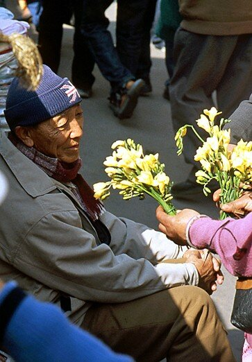 inde_darjeeling_vieux_bouquet