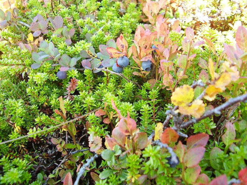 13-09-08 Sortie montagne (57)