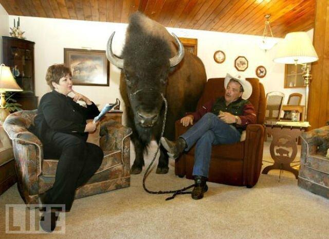 bison010