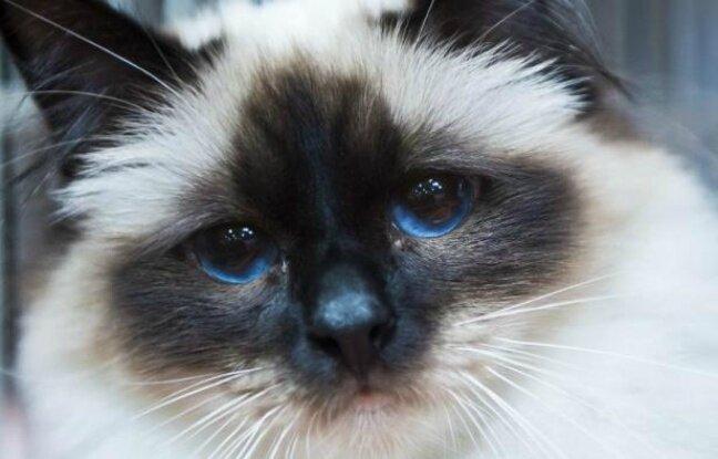 Les animaux «doués de sensibilité», l'Assemblée nationale confirme