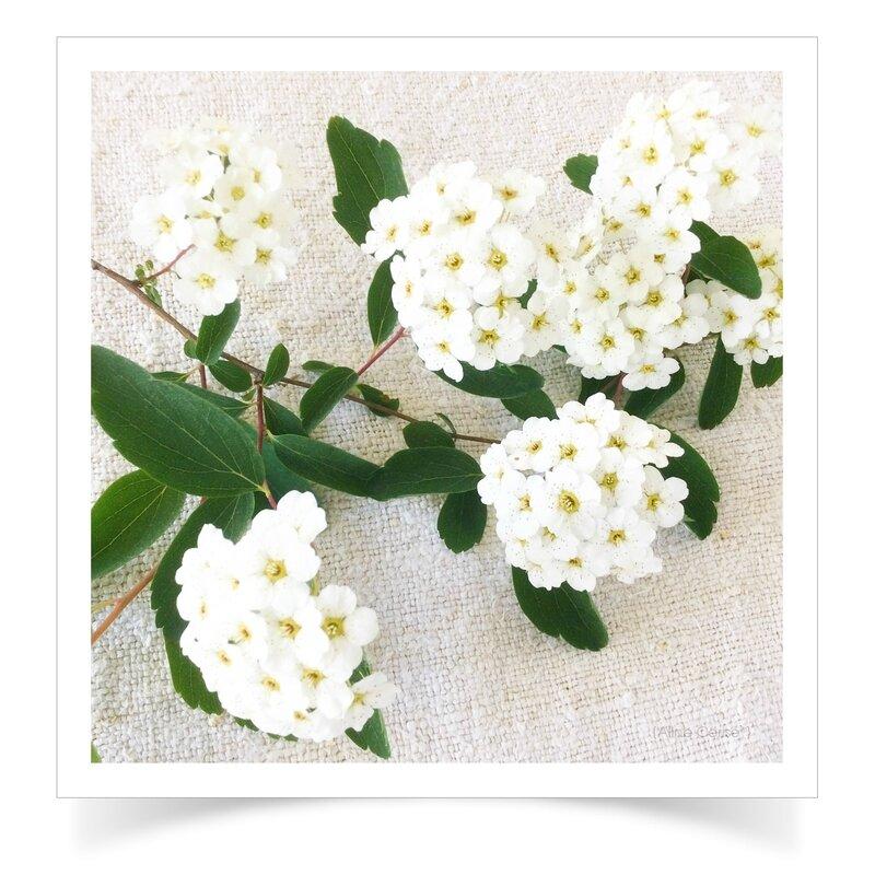 Fleurs-haies1