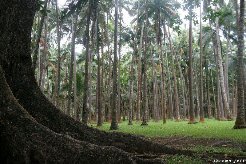 palmeraie anses des cascades