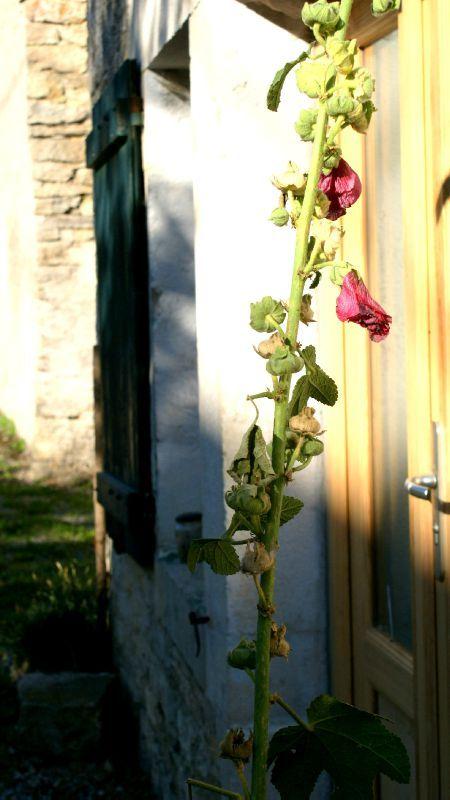 roses t