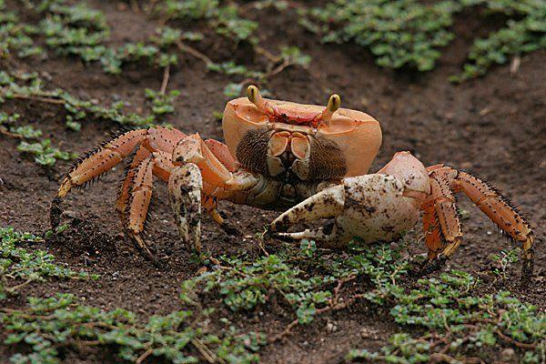 Crabe ewe - Page 3 73147790