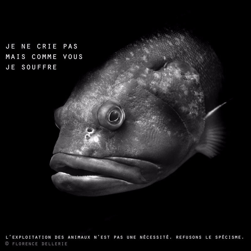 poisson_vegan