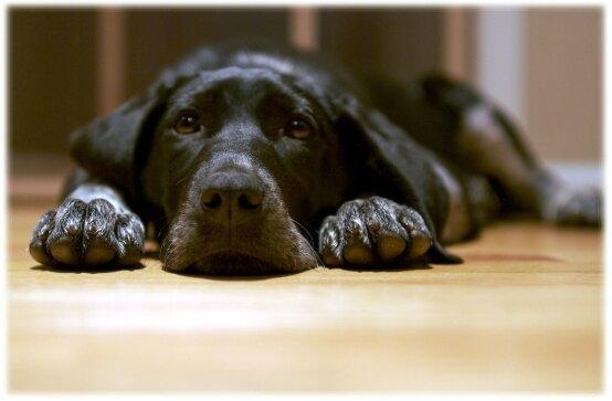 ordre a apprendre chien